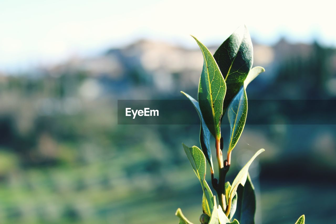 growth, plant, green color, nature, focus on foreground, leaf, beauty in nature, growing, close-up, no people, fragility, freshness, outdoors, new life, day