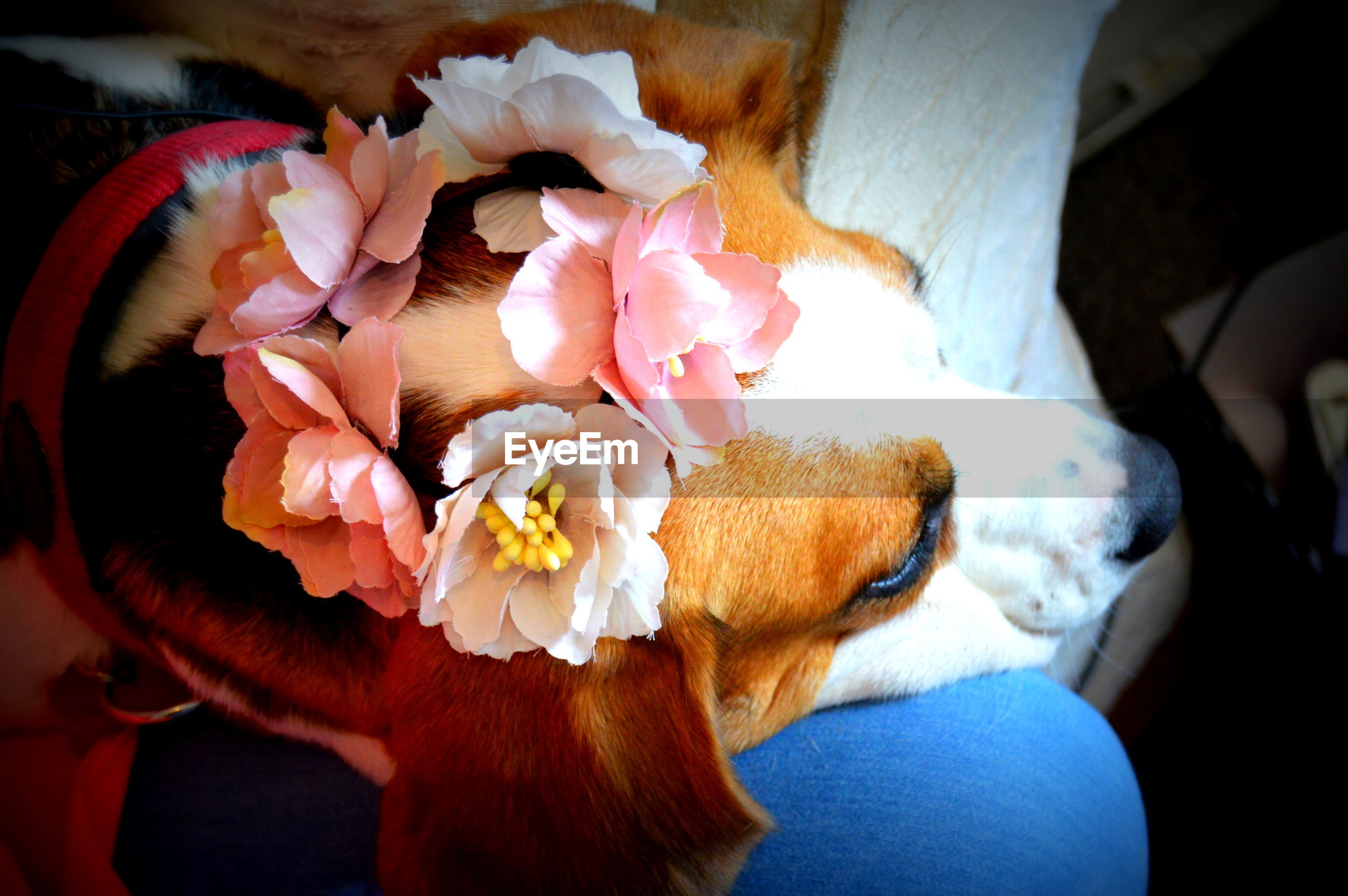 CLOSE-UP OF DOG WITH FLOWER