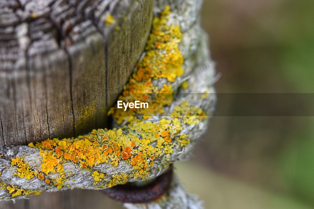 close-up, focus on foreground, selective focus, yellow, day, no people, plant, wood - material, tree trunk, nature, trunk, textured, lichen, tree, outdoors, pattern, autumn, beauty in nature, flower, flowering plant, change