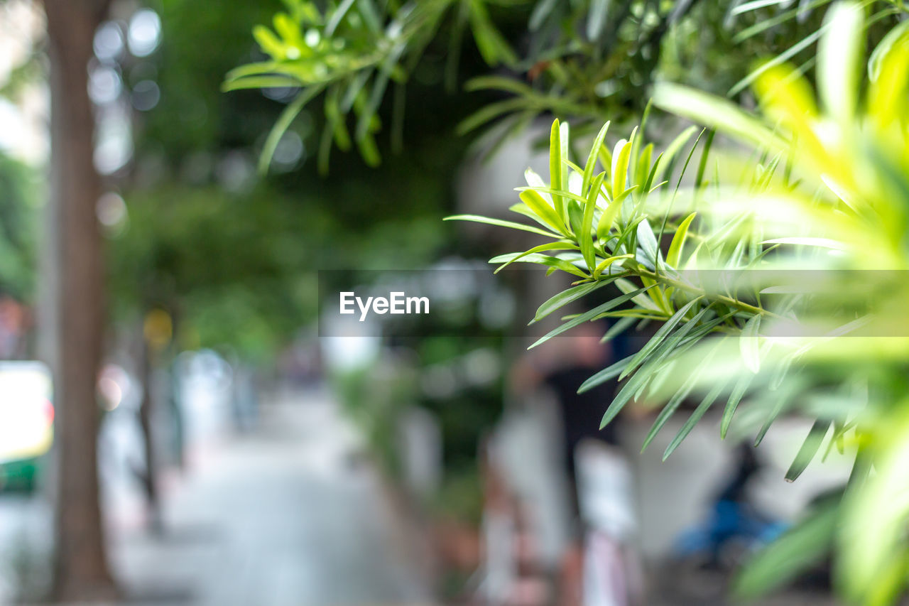 plant, growth, selective focus, green color, day, close-up, leaf, nature, no people, plant part, outdoors, tree, beauty in nature, freshness, in a row, focus on foreground, tranquility, sunlight, vulnerability