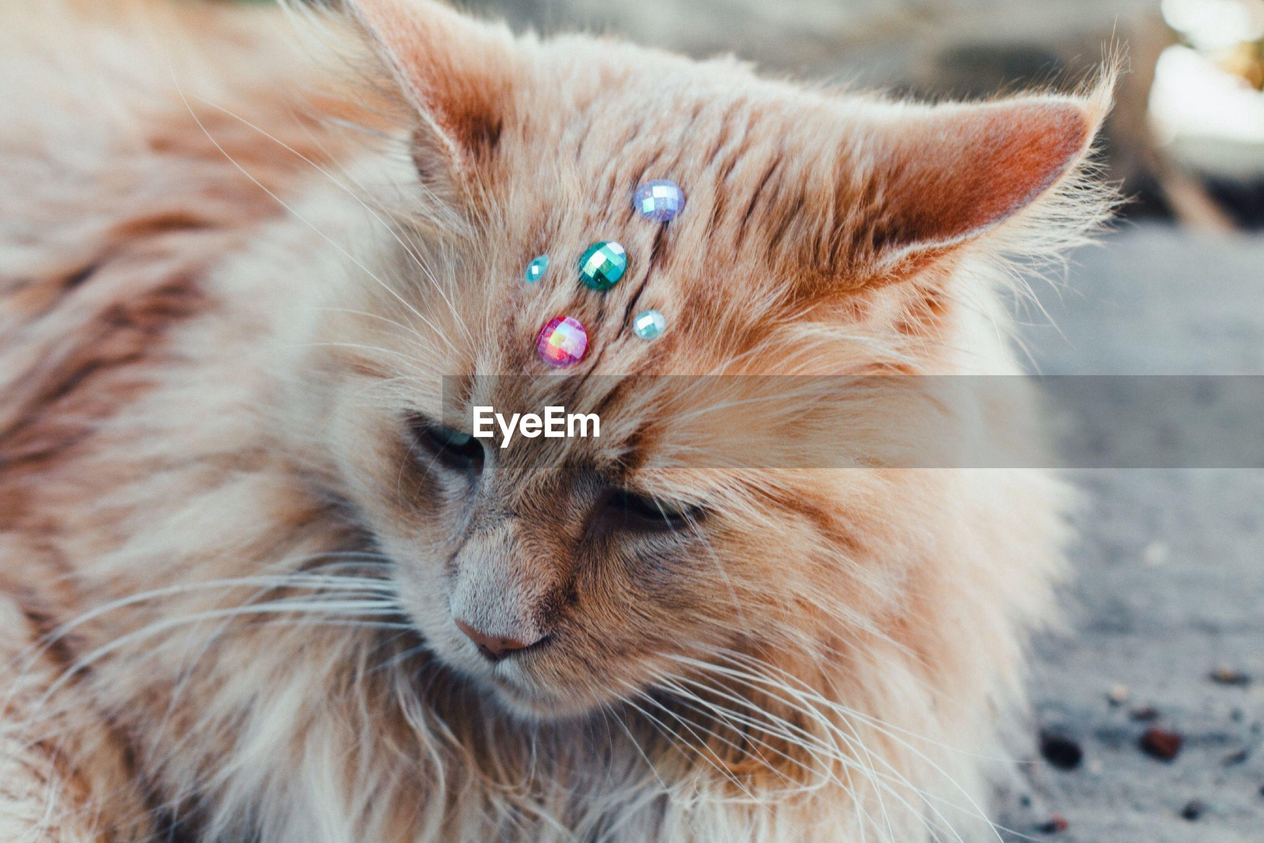 Close-up of cat with gemstones