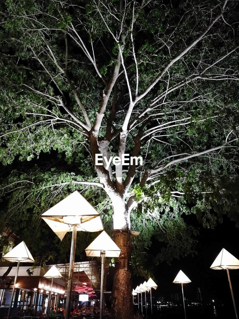 tree, tree trunk, night, outdoors, illuminated, branch, growth, no people, nature
