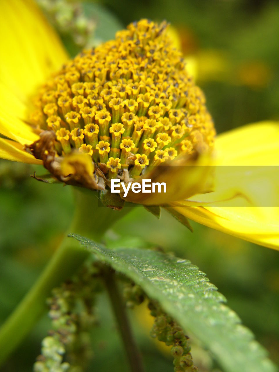 yellow, flower, growth, petal, beauty in nature, fragility, nature, plant, freshness, flower head, close-up, day, outdoors, no people, blooming, animal themes, animals in the wild