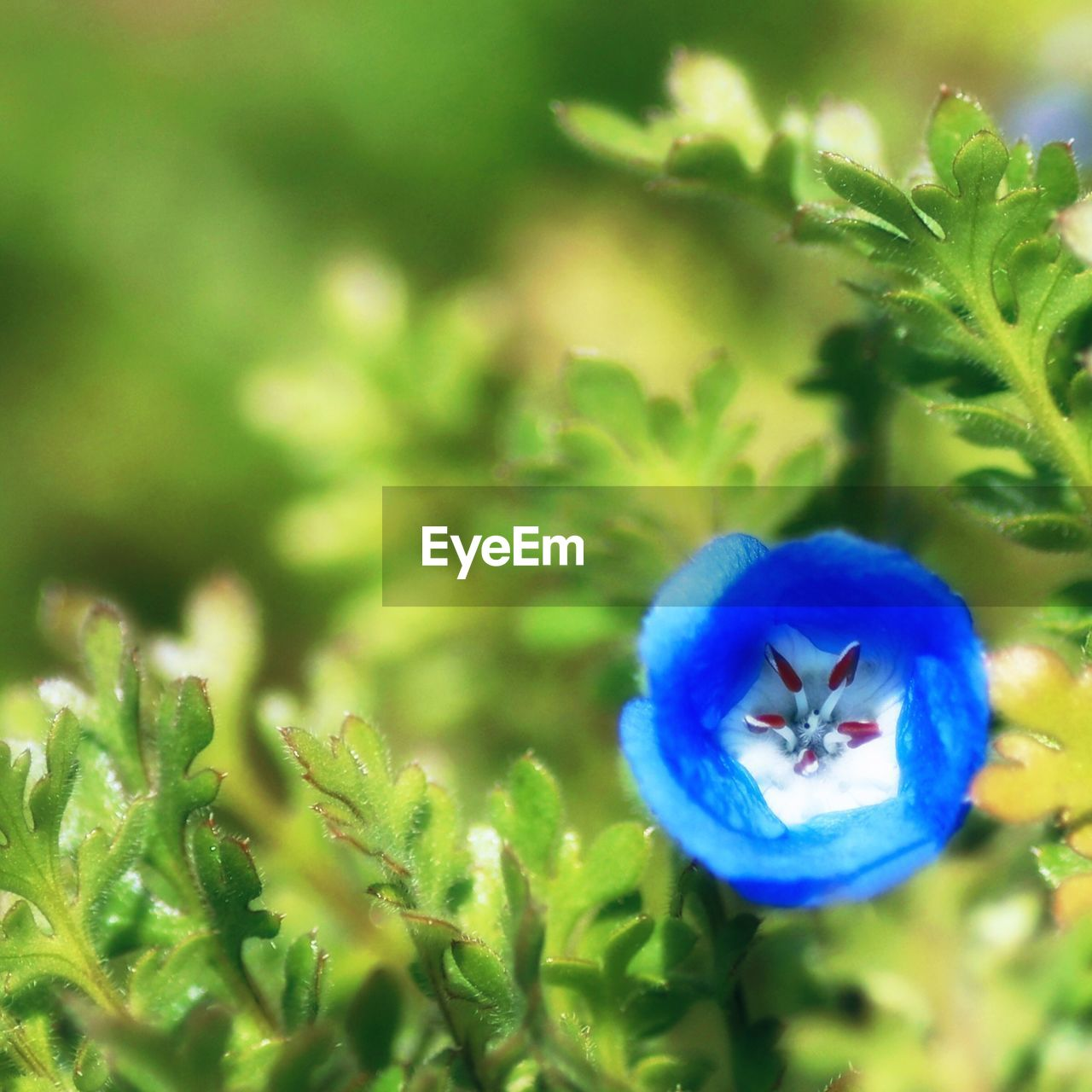 plant, growth, nature, green color, flower, beauty in nature, no people, close-up, blue, freshness, outdoors, fragility, day, flower head