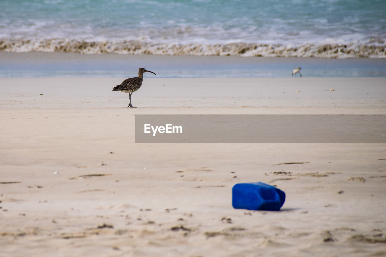 beach, land, water, sea, animal themes, animal, animal wildlife, vertebrate, animals in the wild, one animal, sand, bird, beauty in nature, nature, day, no people, scenics - nature, perching, tranquility