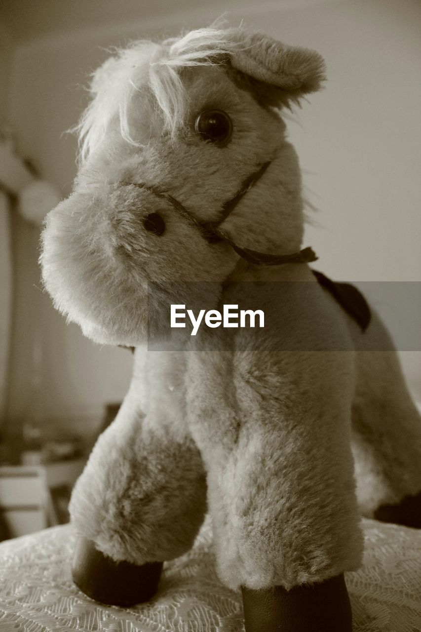 one animal, domestic animals, dog, pets, mammal, animal themes, indoors, no people, stuffed toy, close-up, day