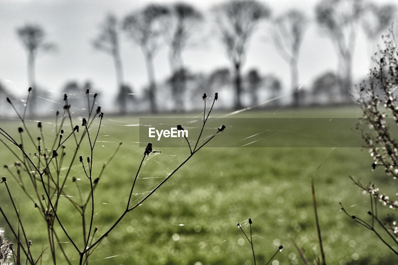 focus on foreground, nature, growth, one animal, day, animal themes, outdoors, plant, insect, field, no people, beauty in nature, animals in the wild, grass, close-up, sky, freshness