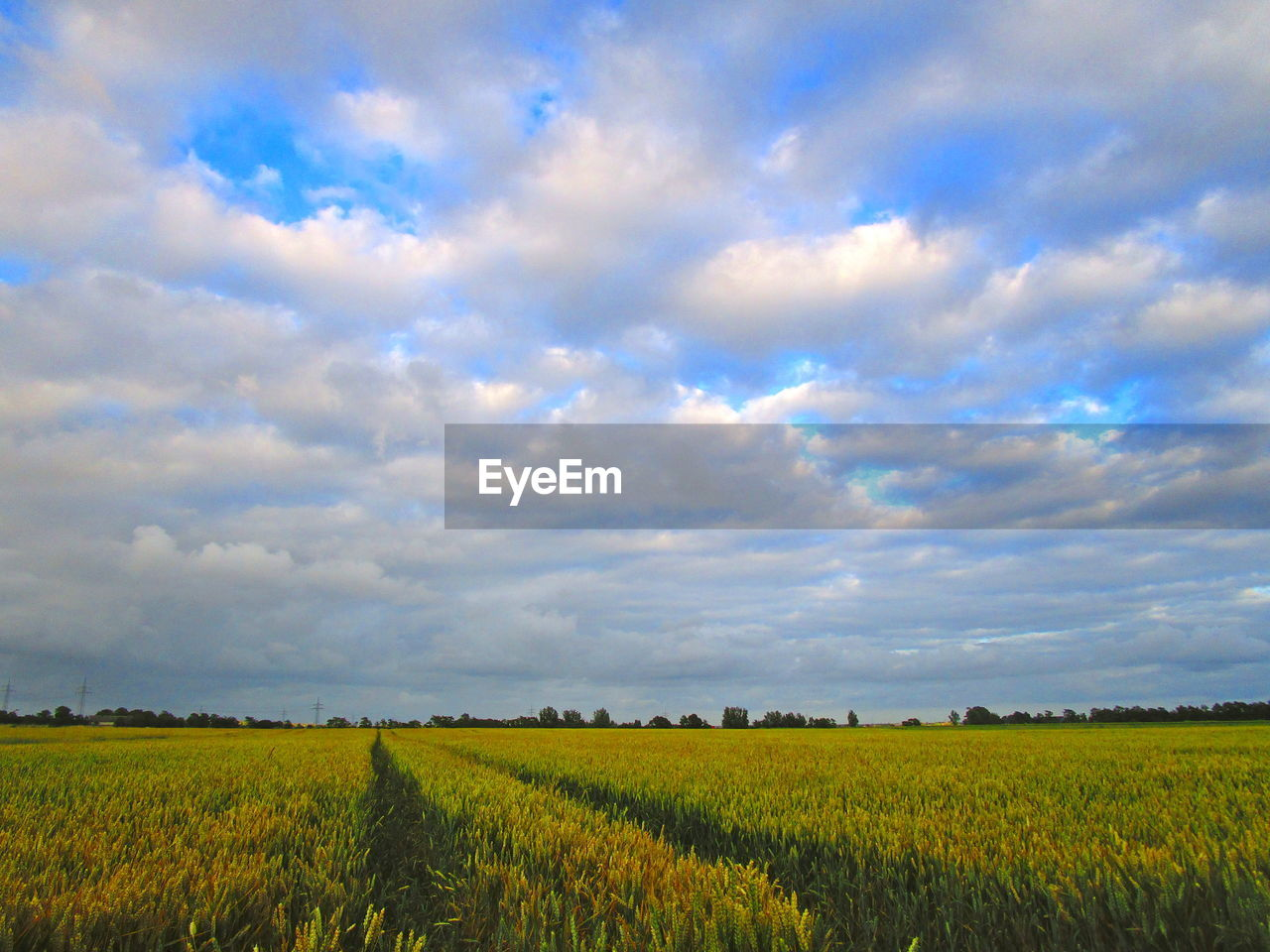cloud - sky, sky, field, landscape, beauty in nature, land, scenics - nature, agriculture, rural scene, environment, tranquil scene, tranquility, plant, growth, nature, farm, crop, no people, idyllic, day, outdoors
