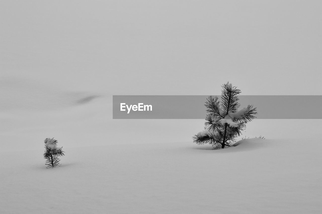 VIEW OF TREE ON SNOW COVERED FIELD