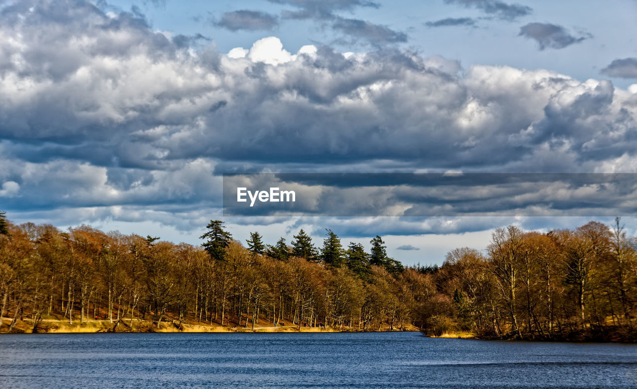 tree, sky, cloud - sky, scenics, nature, beauty in nature, tranquility, lake, tranquil scene, no people, water, outdoors, day, waterfront, landscape, growth, forest, scenery, range