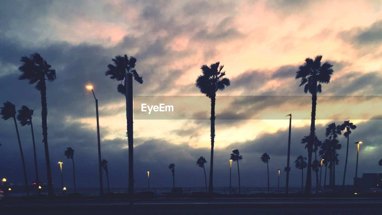 palm tree, tree, outdoors, sky, street light, dusk, silhouette, sunset, cloud - sky, nature, tree trunk, no people, beauty in nature, scenics, day