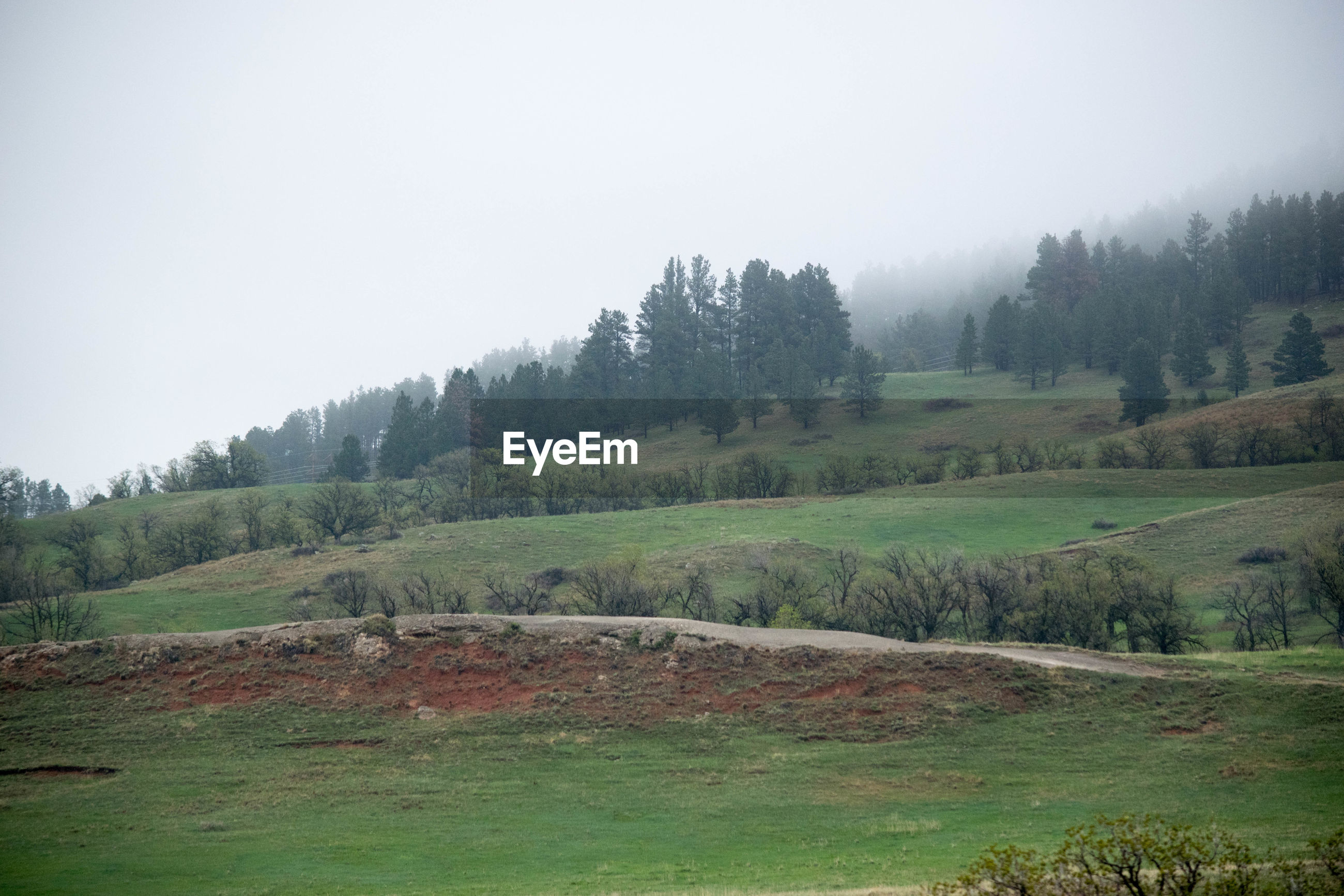 IDYLLIC SHOT OF TREES ON FIELD AGAINST SKY