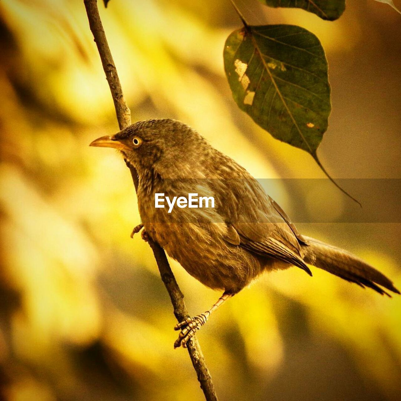 bird, animal themes, vertebrate, animal, animals in the wild, animal wildlife, one animal, perching, plant, close-up, focus on foreground, branch, plant part, leaf, no people, nature, tree, day, outdoors, twig
