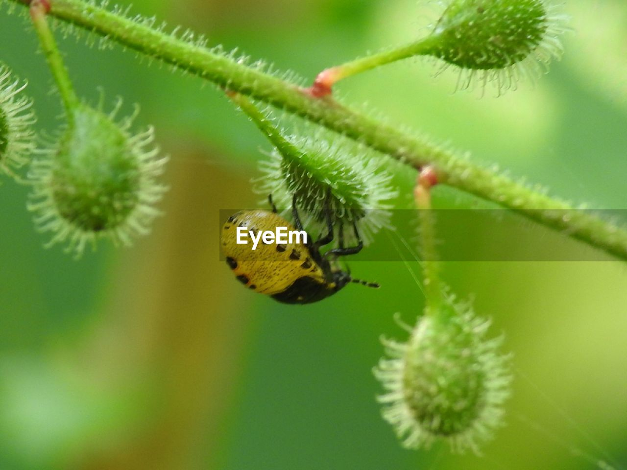 animal wildlife, animals in the wild, insect, animal themes, plant, animal, invertebrate, one animal, close-up, green color, beauty in nature, no people, day, focus on foreground, nature, selective focus, growth, flower, plant part, leaf, outdoors, butterfly - insect