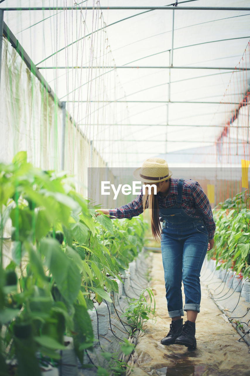 plant, growth, one person, casual clothing, real people, full length, greenhouse, nature, adult, young adult, hat, day, clothing, lifestyles, agriculture, green color, standing, indoors, working, gardening, plant nursery, care