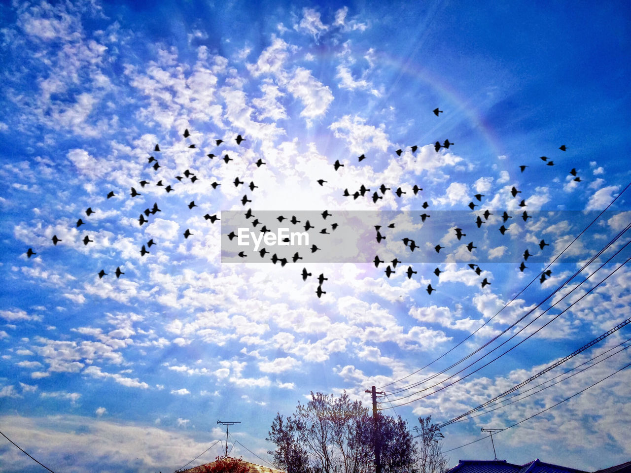 sky, cloud - sky, low angle view, flying, celebration, flock of birds, day, blue, mid-air, outdoors, large group of animals, no people, nature, beauty in nature, bird