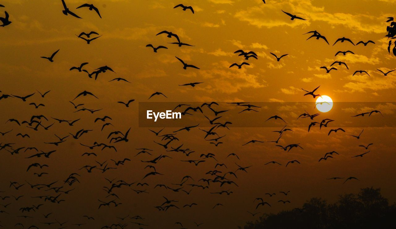 animal wildlife, animals in the wild, animal themes, large group of animals, animal, bird, vertebrate, group of animals, silhouette, sky, flying, sunset, low angle view, no people, beauty in nature, flock of birds, nature, mid-air, dusk, scenics - nature, outdoors
