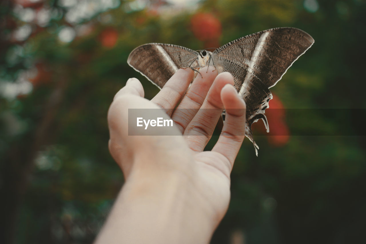 Close-up of hand holding butterfly