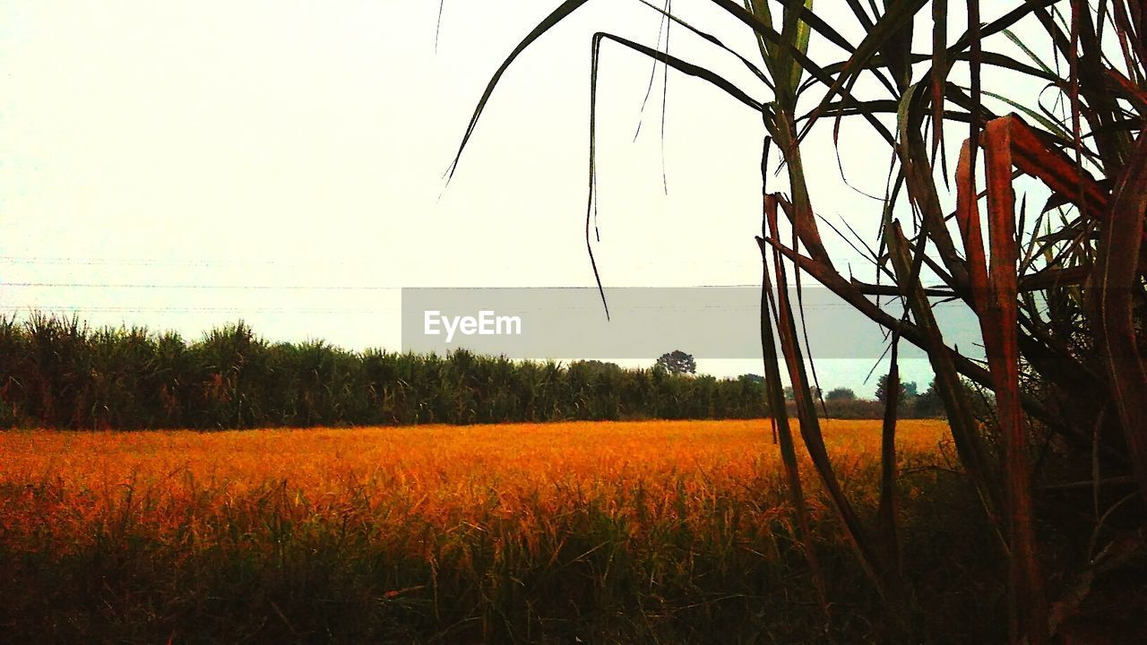 nature, growth, field, grass, landscape, tree, no people, plant, agriculture, tranquility, beauty in nature, outdoors, sky, water, day