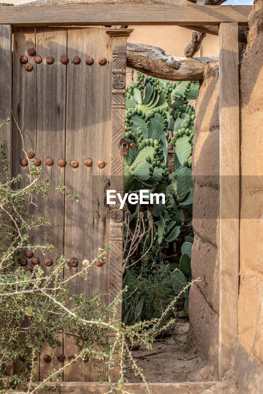 plant, architecture, growth, nature, no people, day, wood - material, built structure, outdoors, leaf, building exterior, entrance, plant part, gate, sunlight, metal, door, green color, building, house