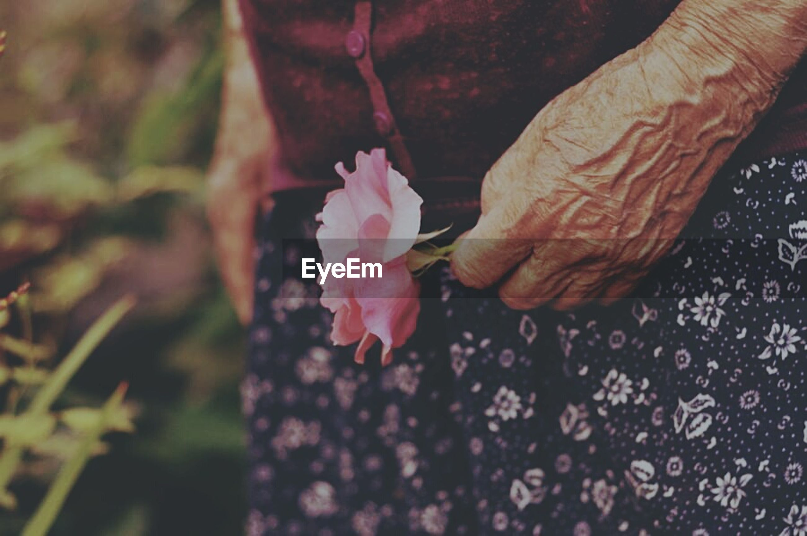 person, freshness, close-up, flower, part of, holding, cropped, petal, focus on foreground, fragility, selective focus, human finger, unrecognizable person, nature, day, pink color, high angle view