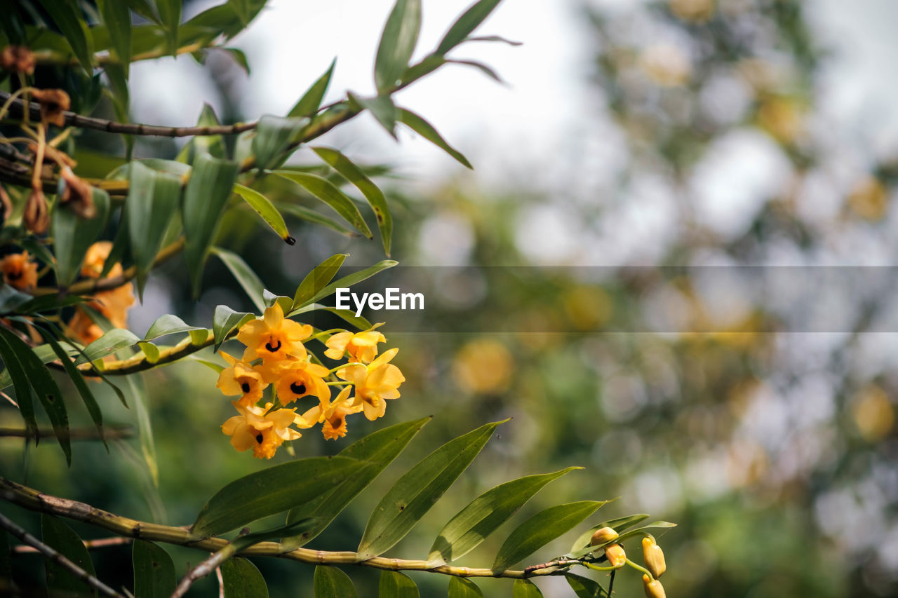 flower, growth, petal, beauty in nature, freshness, fragility, nature, plant, flower head, focus on foreground, no people, day, blooming, outdoors, yellow, green color, leaf, close-up