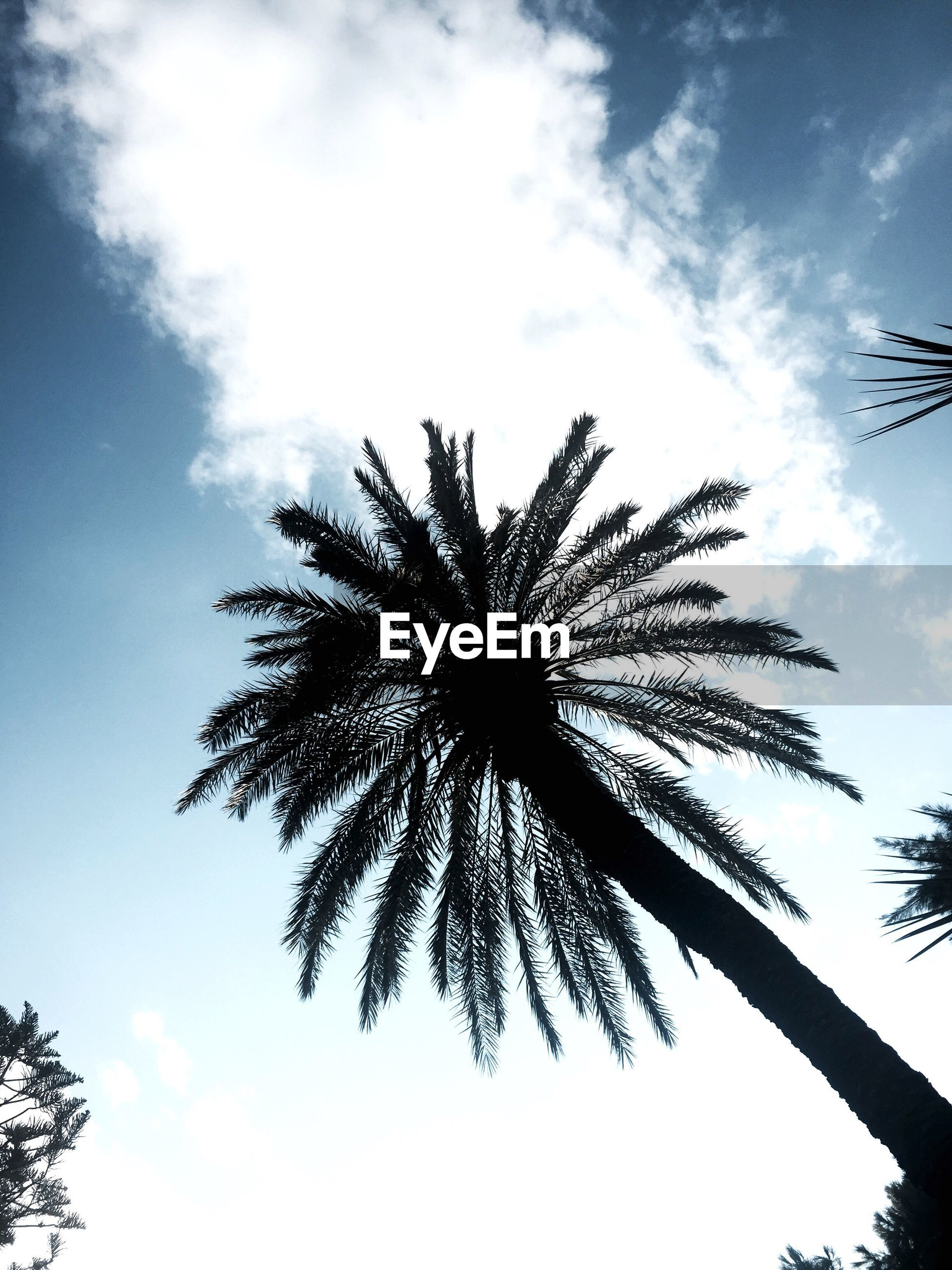 low angle view, sky, palm tree, growth, beauty in nature, nature, scenics, cloud, tall - high, tranquility, cloud - sky, outdoors, tree trunk, day, tranquil scene, majestic, high section, no people, bright
