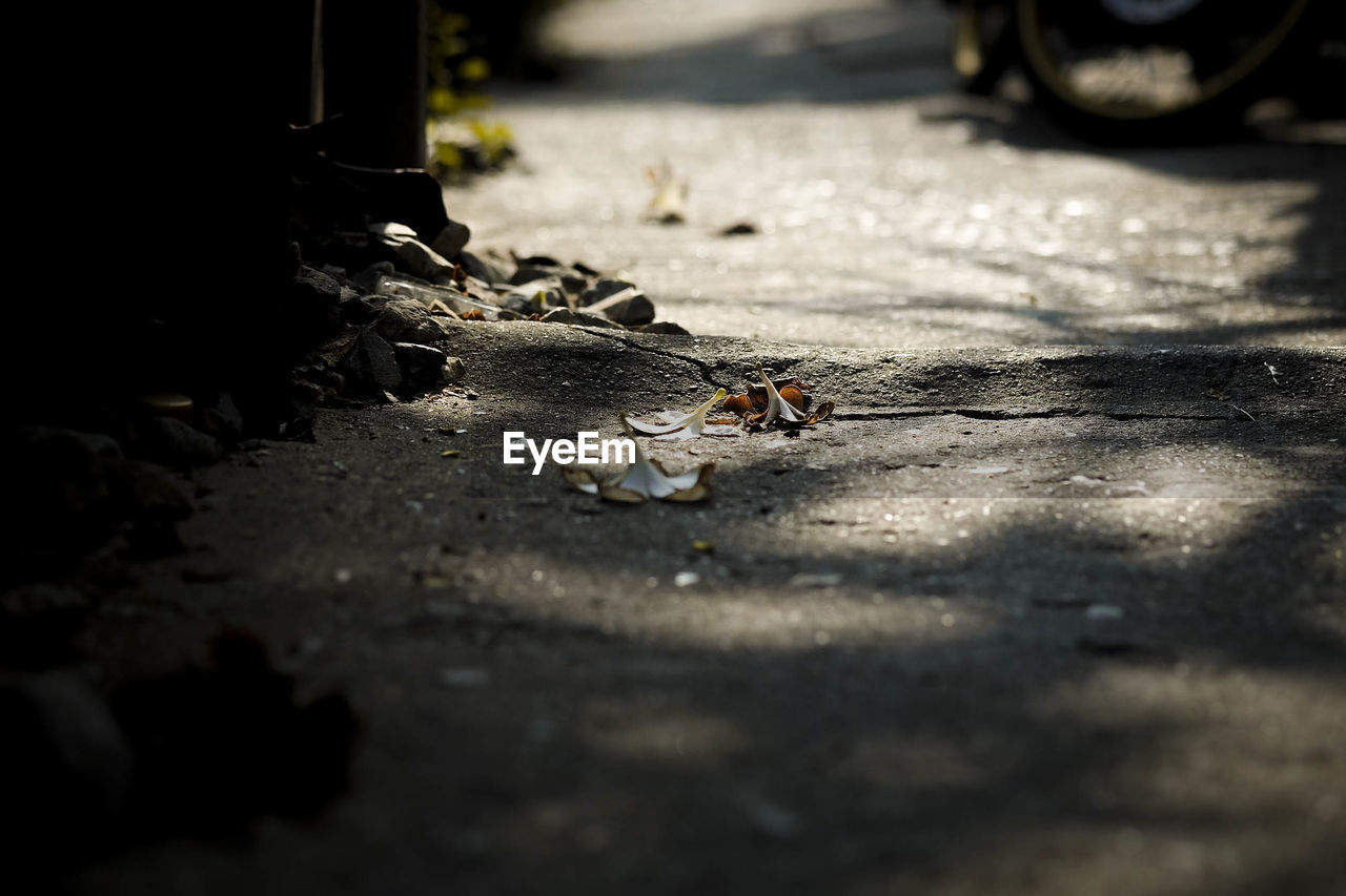 no people, selective focus, outdoors, day, nature, close-up