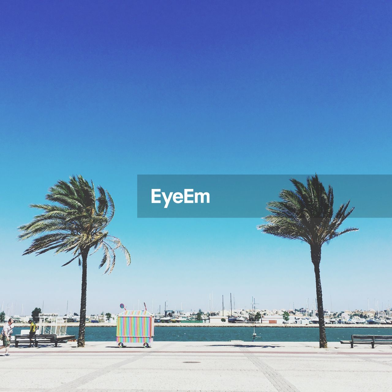 palm tree, tree, clear sky, copy space, blue, day, outdoors, beach, tree trunk, travel destinations, road, no people, sea, beauty in nature, nature, sky