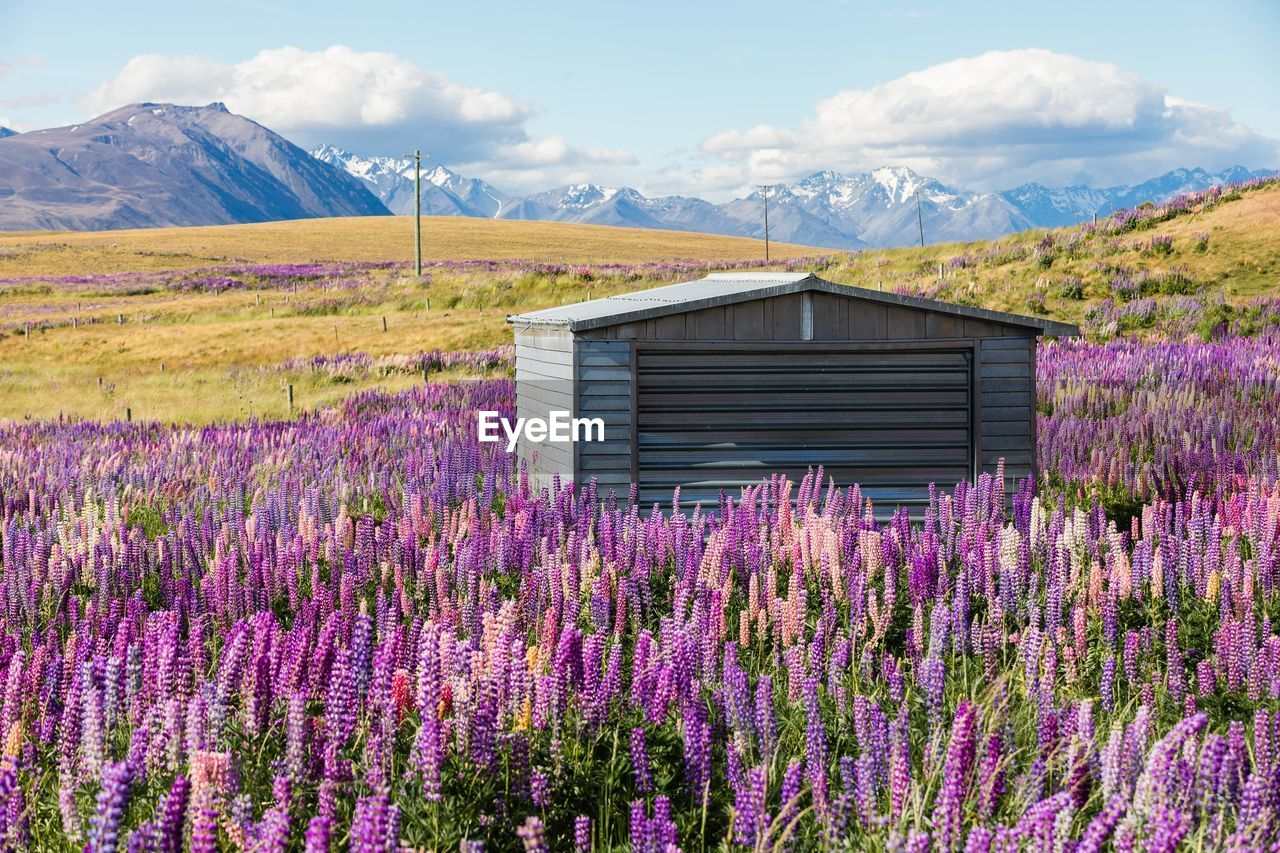 mountain, cloud - sky, land, flower, beauty in nature, nature, flowering plant, purple, sky, scenics - nature, landscape, no people, growth, plant, day, field, lavender, architecture, environment, built structure, outdoors, flowerbed