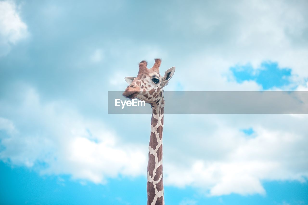 cloud - sky, sky, low angle view, animal, nature, day, one animal, no people, giraffe, animal themes, mammal, outdoors, animal wildlife, animals in the wild, animal body part, tall - high, overcast, vertebrate, celebration, white color, animal neck, herbivorous