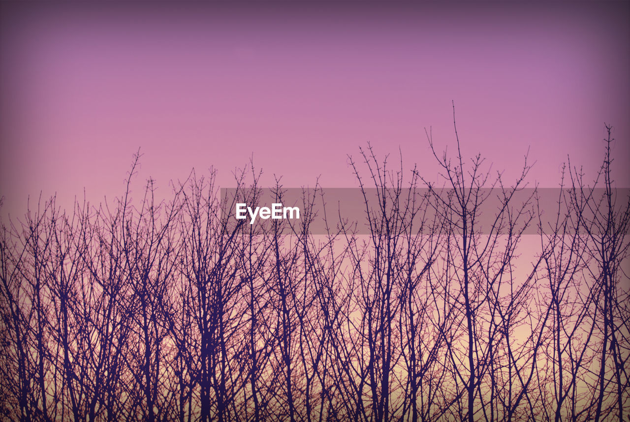 nature, beauty in nature, tranquility, tranquil scene, no people, outdoors, bare tree, scenics, sky, growth, clear sky, low angle view, tree, branch, sunset, day
