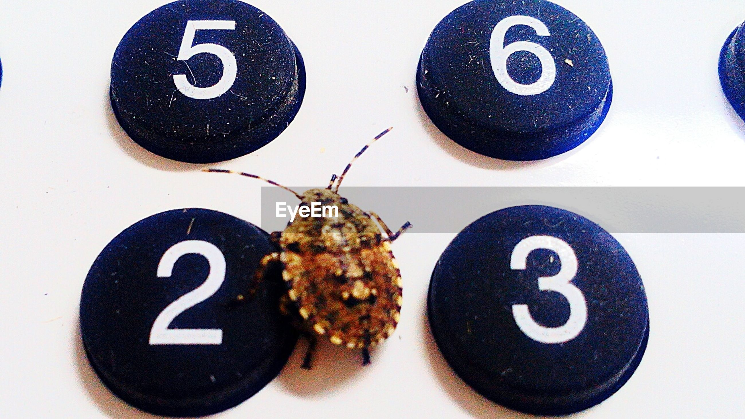 Close-up of bug on push button