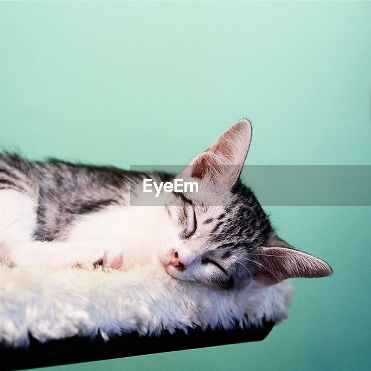 domestic cat, animal themes, one animal, domestic animals, feline, pets, sleeping, eyes closed, no people, indoors, mammal, close-up, day, nature