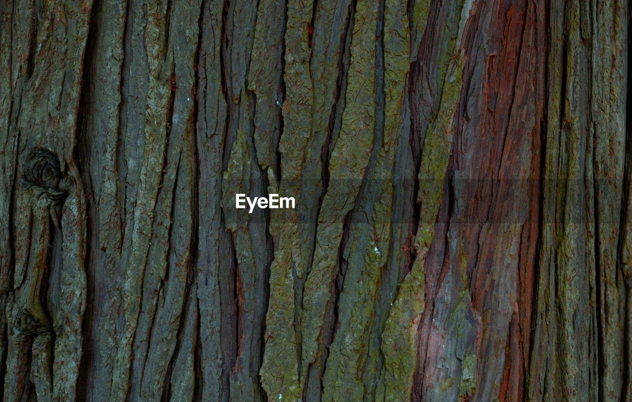 backgrounds, full frame, textured, no people, pattern, rough, close-up, day, natural pattern, outdoors, abstract, brown, tree trunk, weathered, wood - material, trunk, growth, nature, damaged, simplicity, wood grain