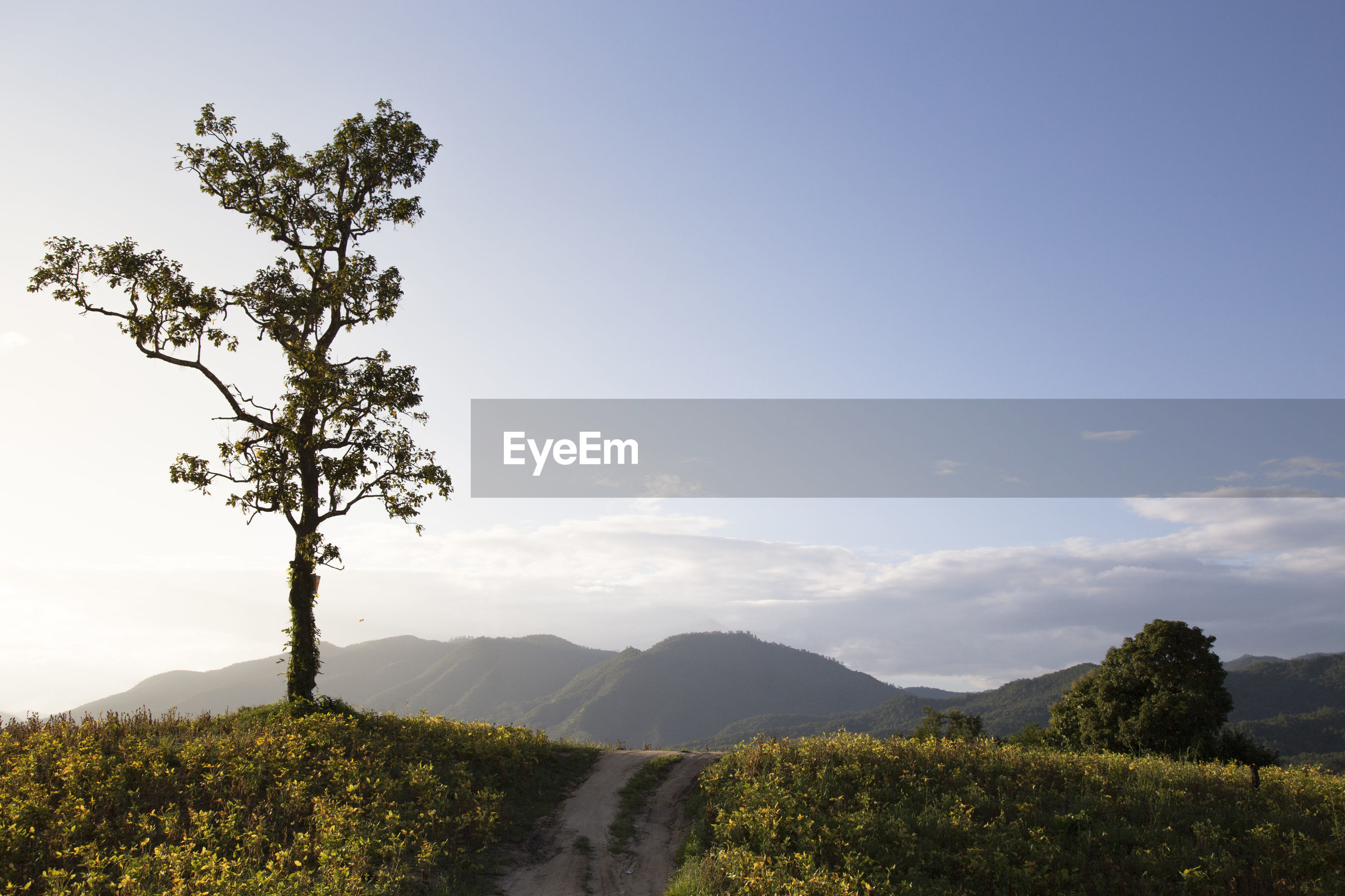 SCENIC VIEW OF TREES ON FIELD BY MOUNTAIN AGAINST SKY