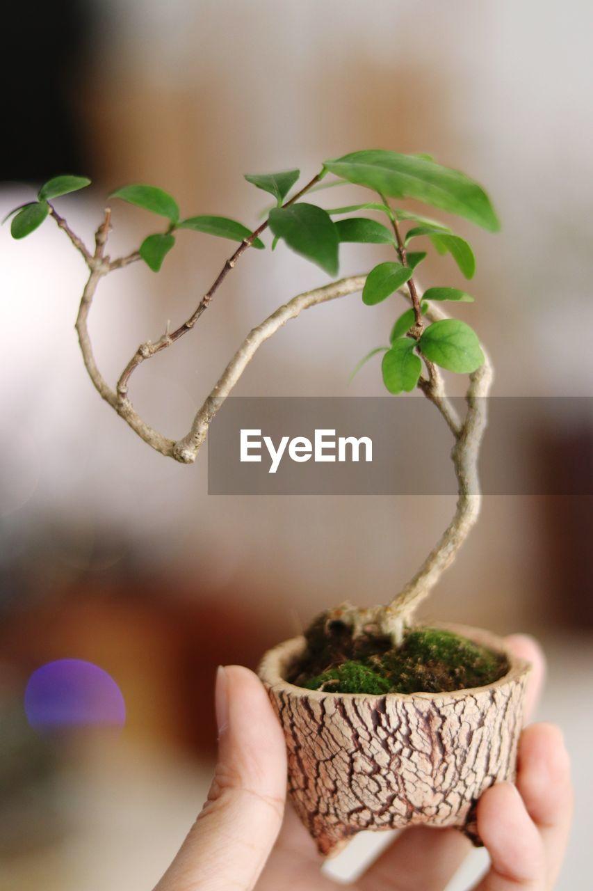 Cropped hand holding bonsai tree