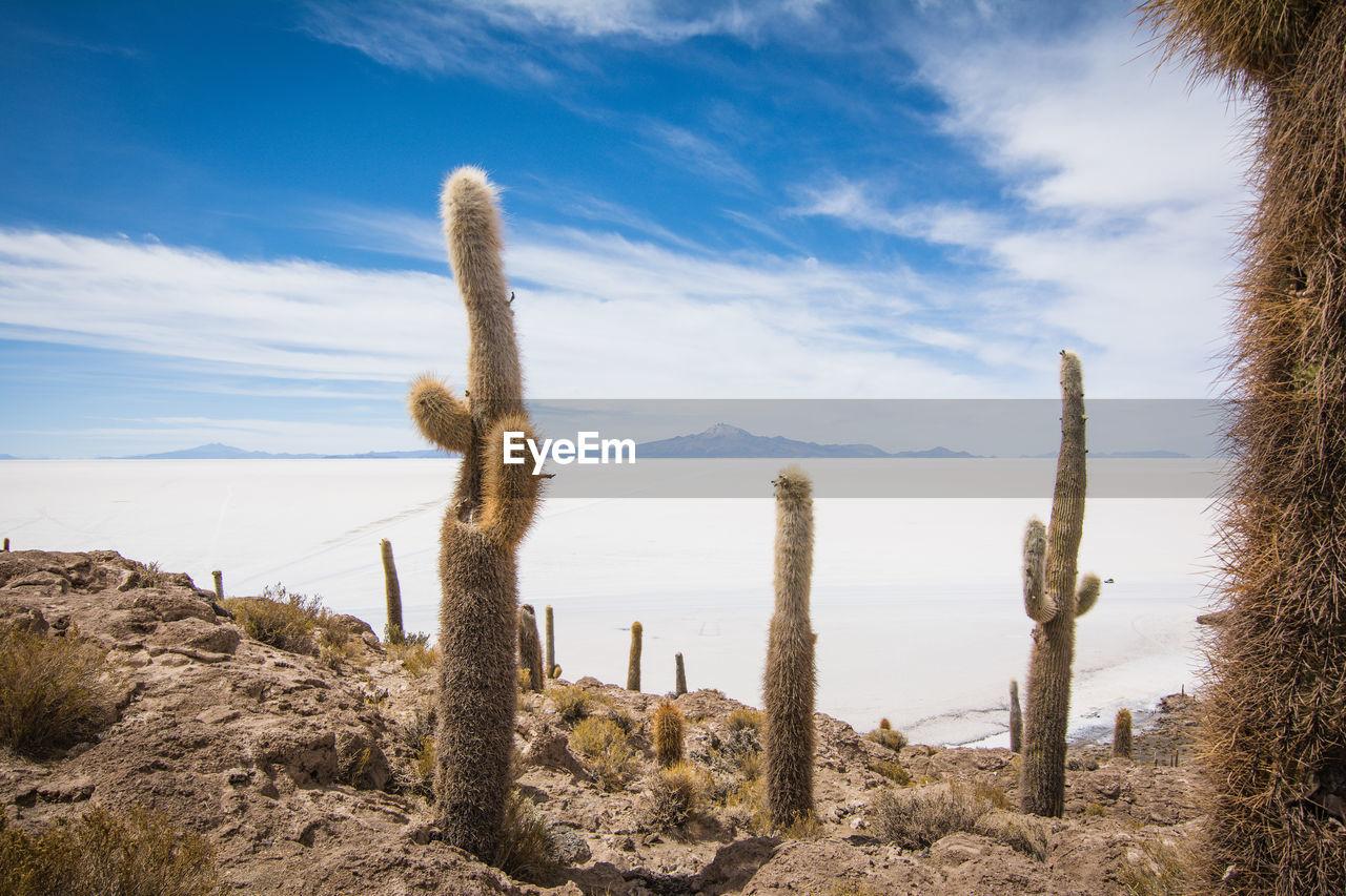 Cactus Plants Against Calm Sea