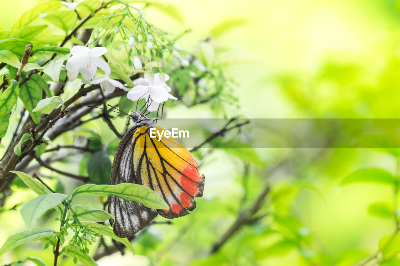 plant, growth, beauty in nature, focus on foreground, flower, flowering plant, close-up, no people, leaf, plant part, day, green color, nature, vulnerability, fragility, yellow, freshness, animal wildlife, insect, one animal, flower head, outdoors, butterfly - insect, pollination
