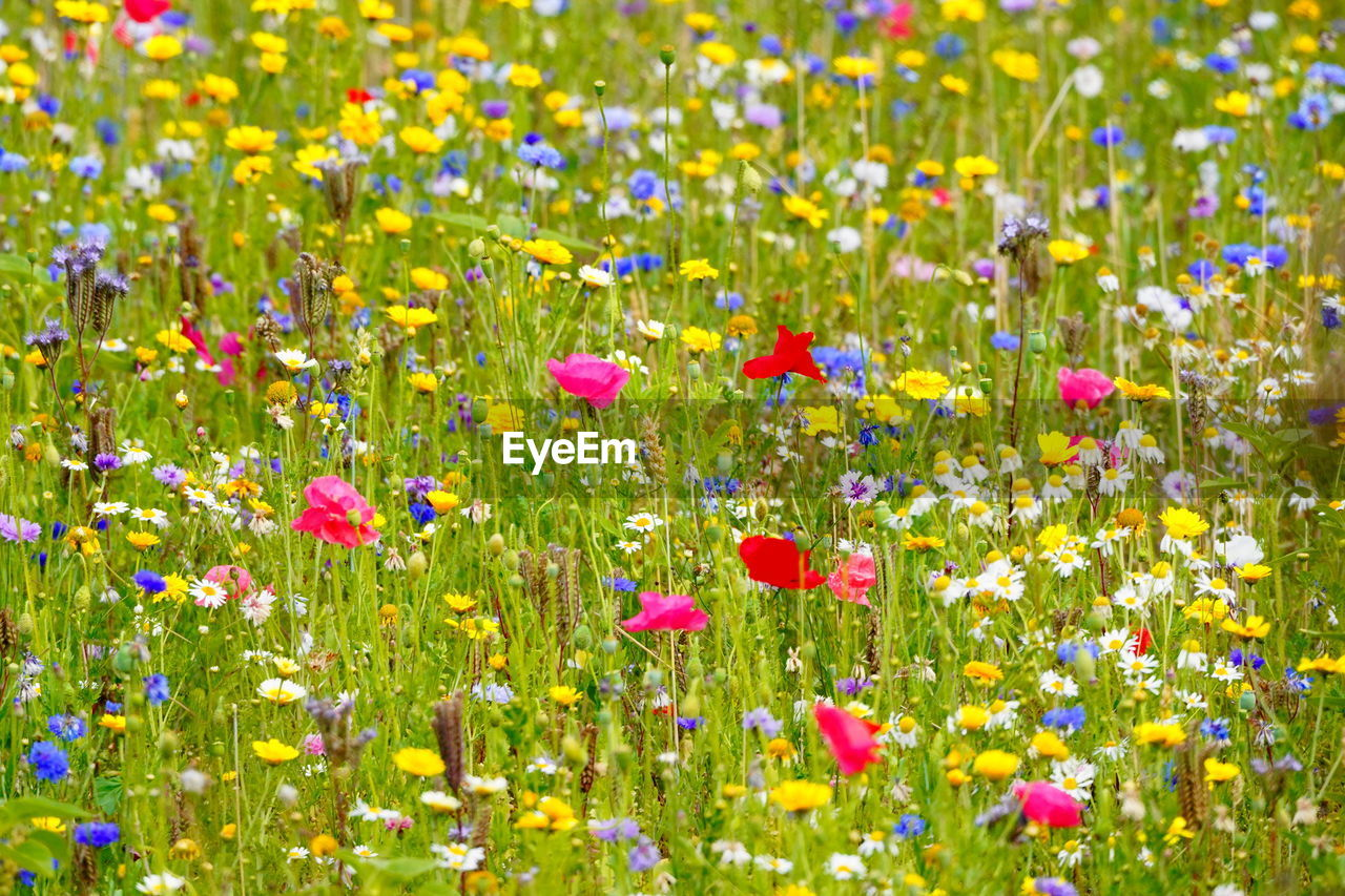 flowering plant, flower, plant, beauty in nature, fragility, vulnerability, freshness, growth, field, yellow, nature, land, backgrounds, multi colored, no people, flowerbed, flower head, inflorescence, abundance, selective focus, outdoors, springtime, bright