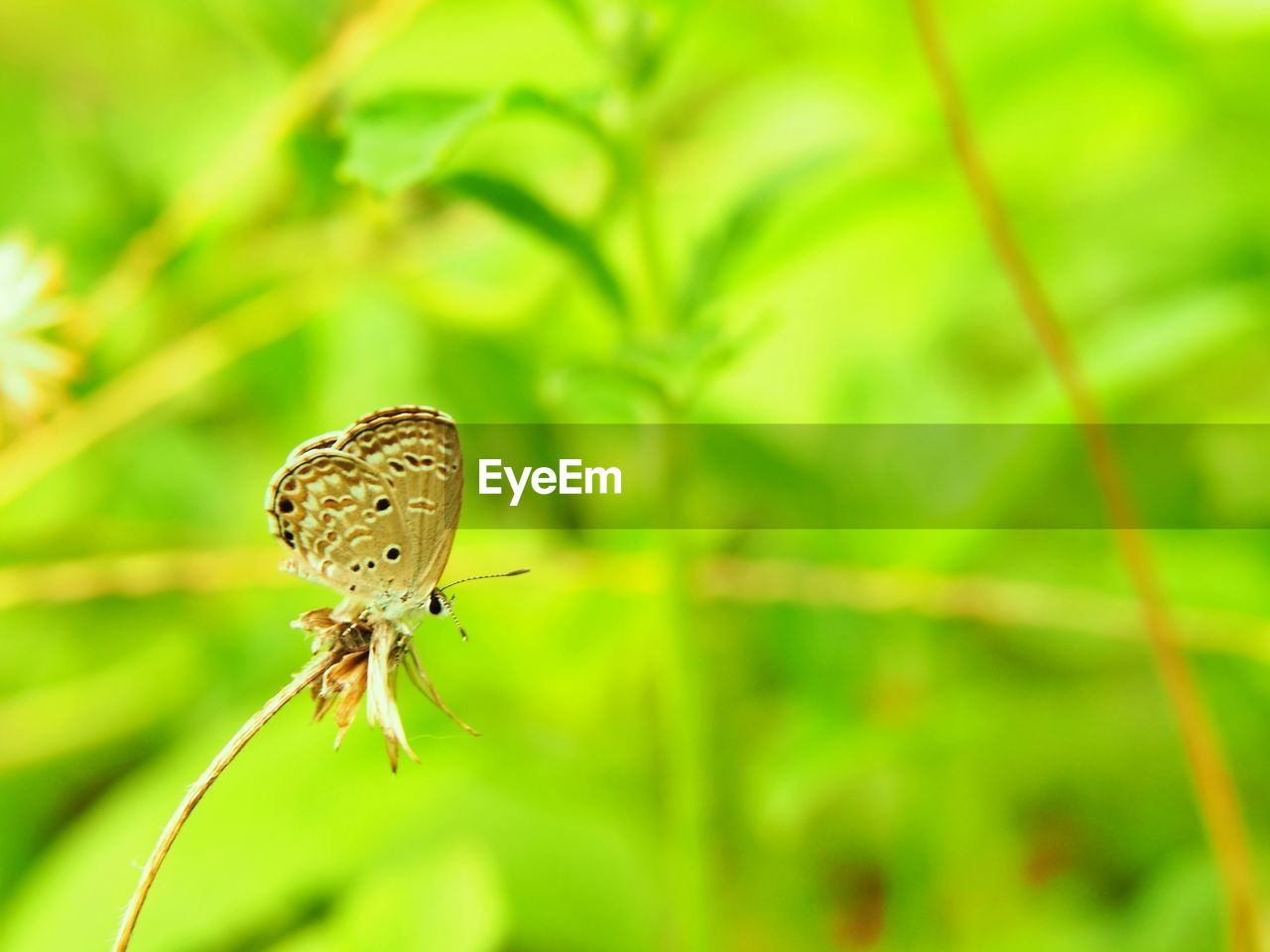 animal wildlife, plant, animals in the wild, animal themes, one animal, animal, focus on foreground, beauty in nature, invertebrate, close-up, insect, green color, flower, growth, no people, nature, animal wing, day, vulnerability, fragility, outdoors, butterfly - insect, butterfly, pollination