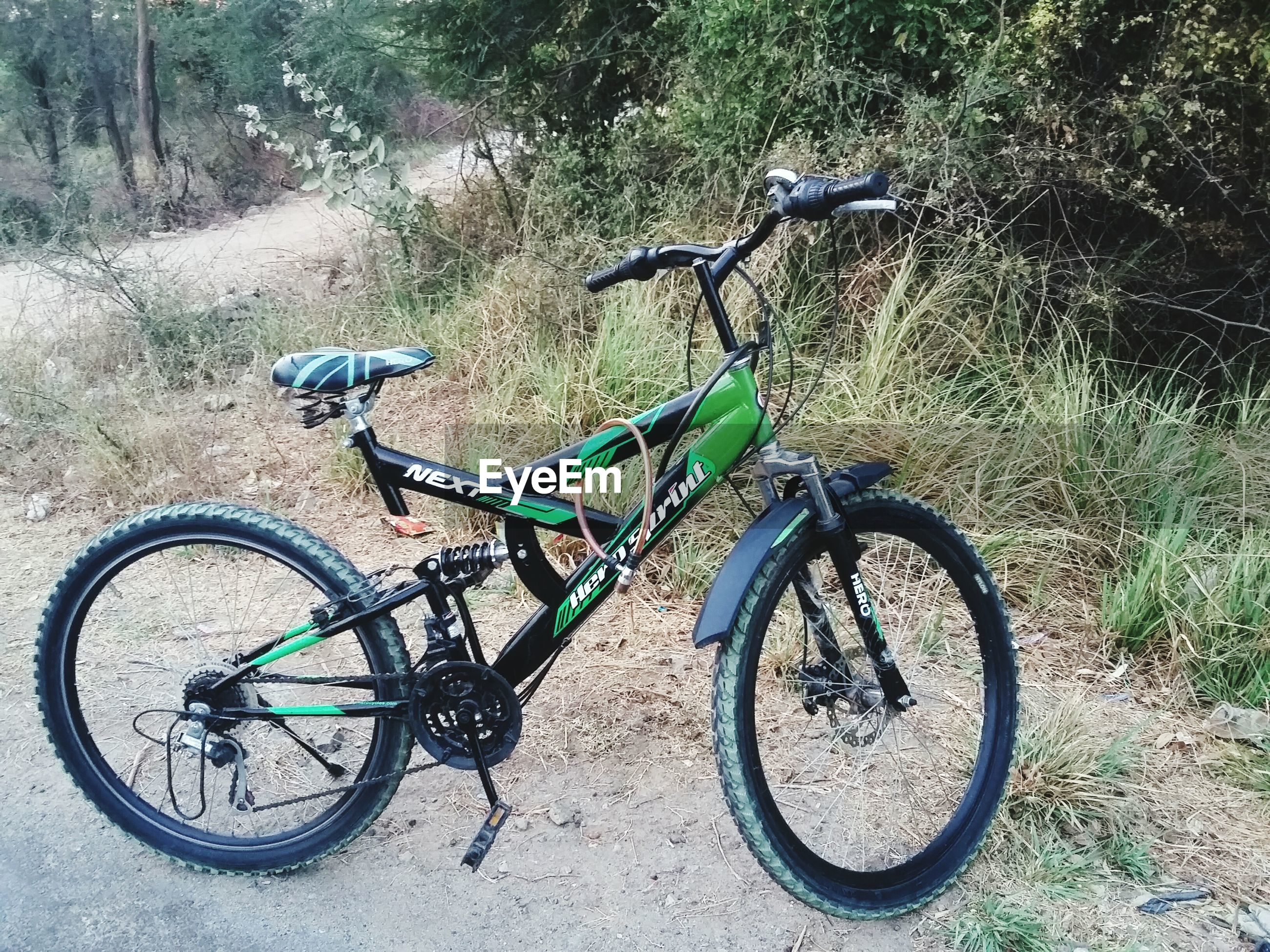 bicycle, transportation, mode of transport, land vehicle, stationary, parked, parking, cycle, side view, travel, day, riding, no people, outdoors, wheel, street, tree, road, bicycle basket, motorcycle