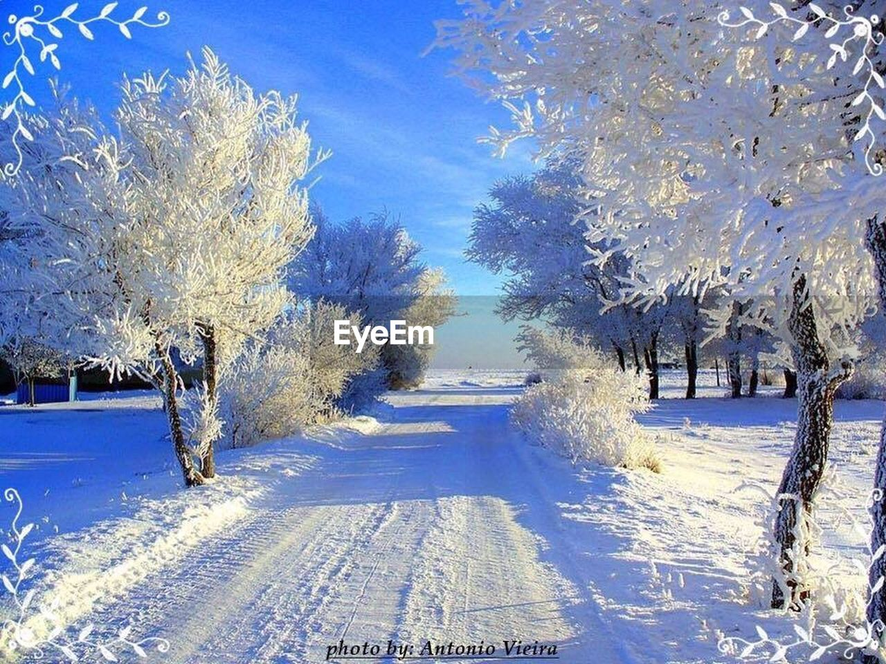 snow, tree, winter, cold temperature, nature, tranquility, tranquil scene, beauty in nature, landscape, blue, day, outdoors, scenics, road, bare tree, no people, sky