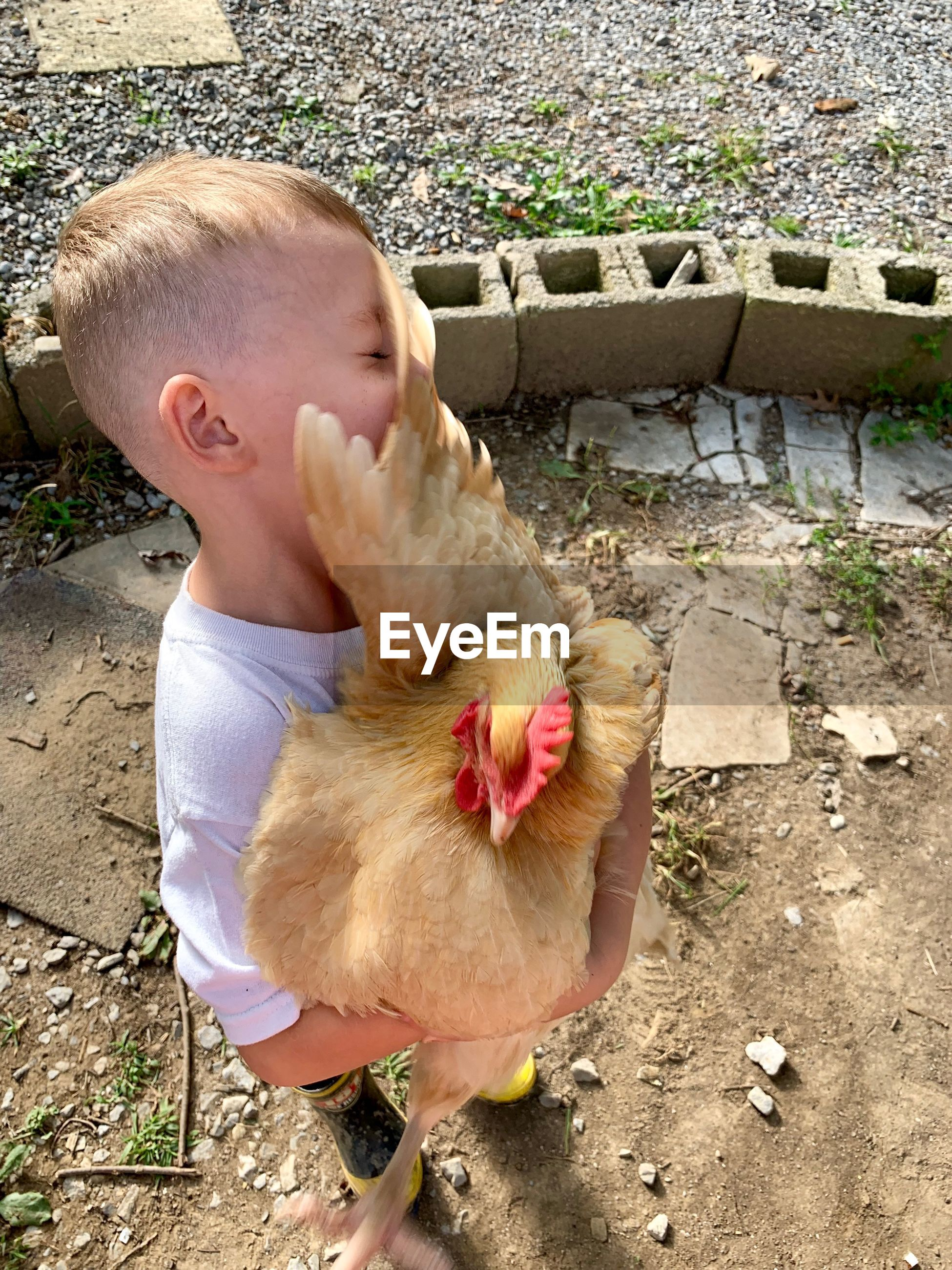 High angle view of cute boy holding chicken