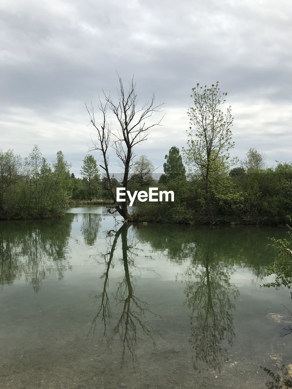 water, tree, plant, sky, cloud - sky, reflection, lake, tranquility, beauty in nature, tranquil scene, scenics - nature, nature, growth, waterfront, no people, day, non-urban scene, outdoors, idyllic, reflection lake