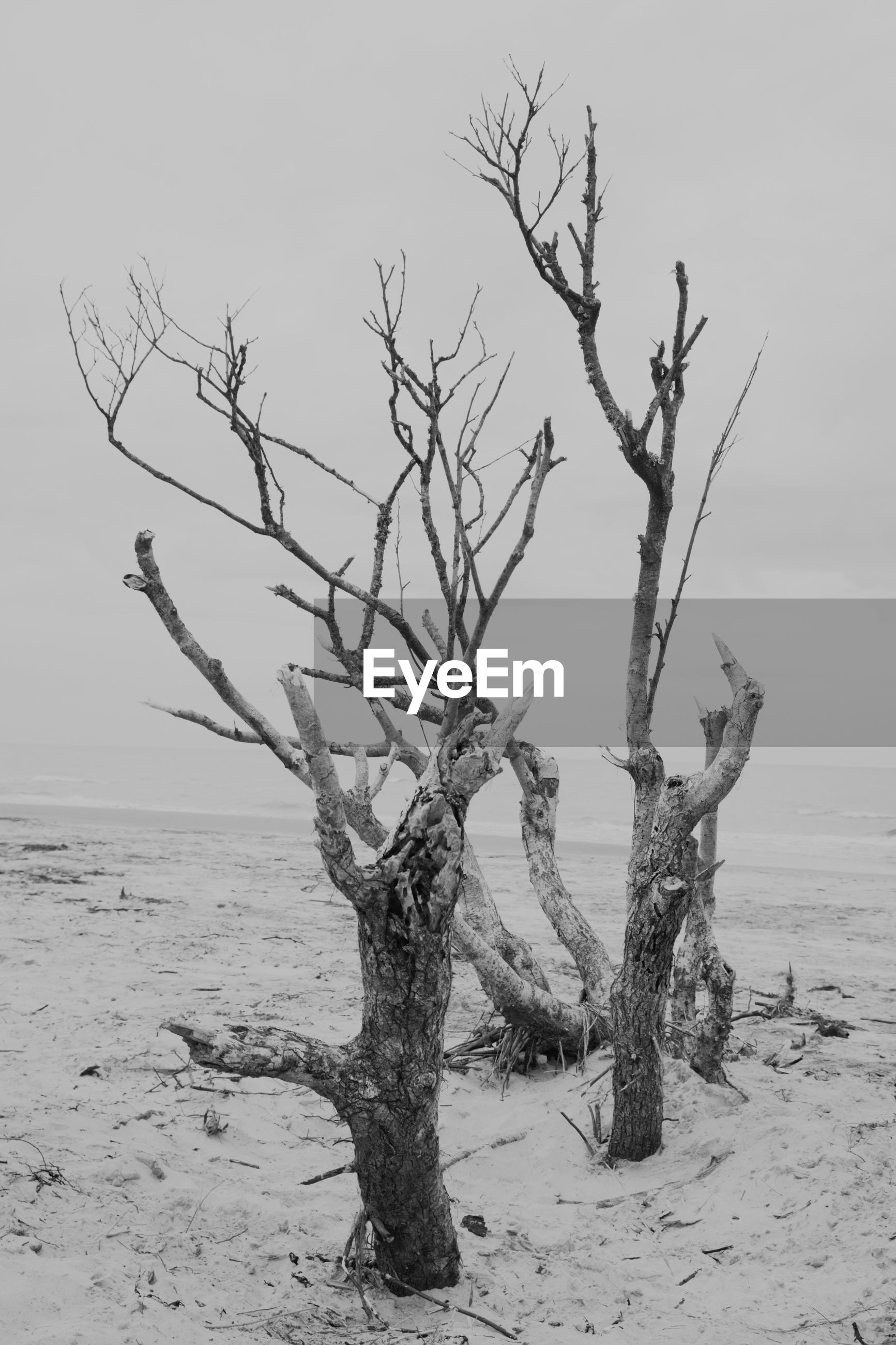 BARE TREE BY SEA