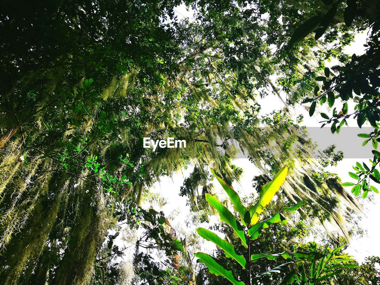 tree, low angle view, nature, growth, beauty in nature, branch, green color, day, no people, outdoors, tranquil scene, tranquility, forest, leaf, scenics, tree trunk, freshness, sky