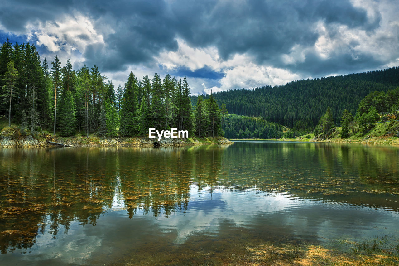 water, cloud - sky, lake, tree, beauty in nature, scenics - nature, tranquil scene, plant, tranquility, sky, reflection, nature, waterfront, non-urban scene, forest, day, idyllic, no people, growth, outdoors