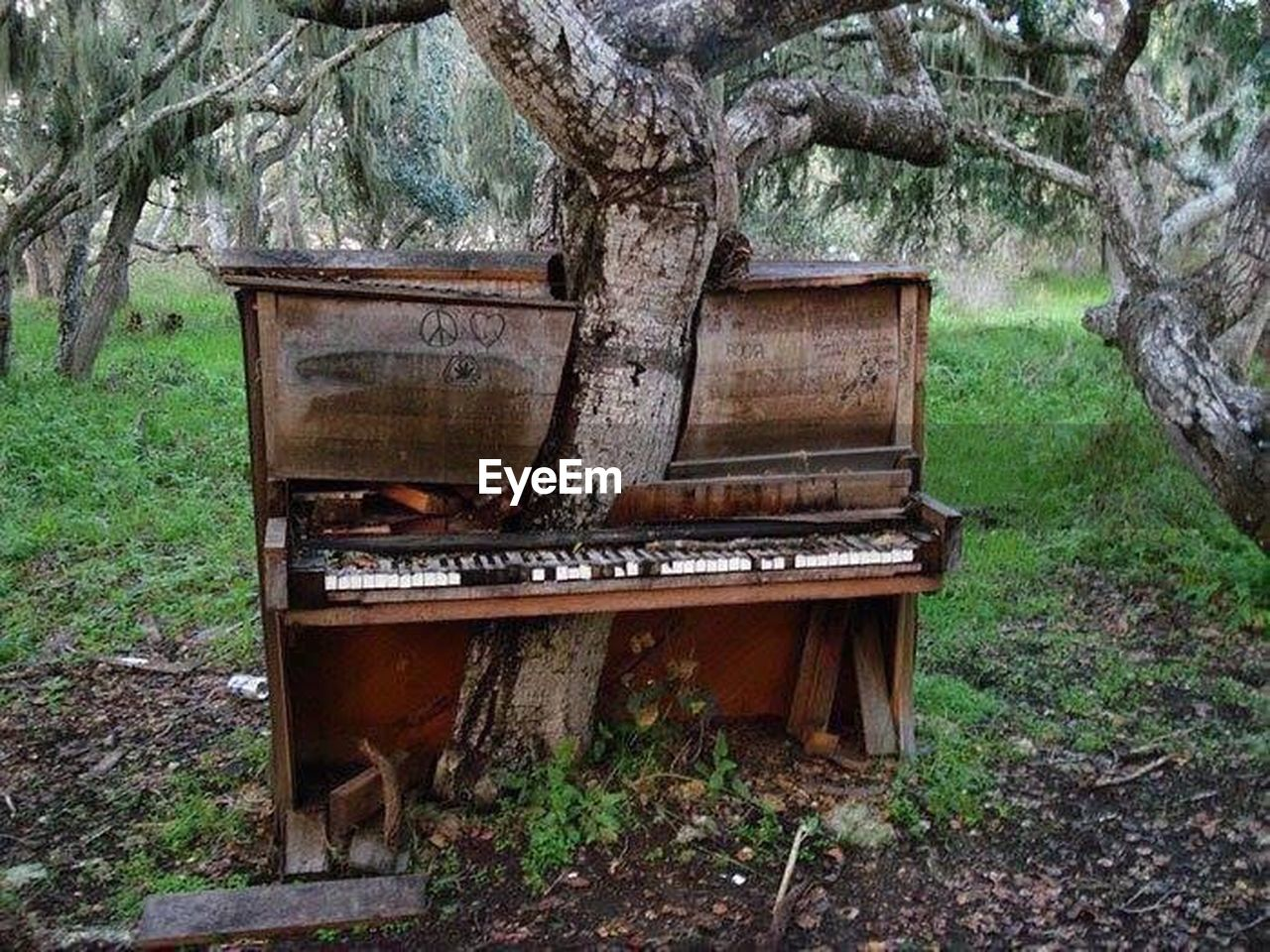 tree, abandoned, music, day, no people, growth, damaged, field, nature, tree trunk, outdoors, musical instrument, piano, branch, grass, beauty in nature