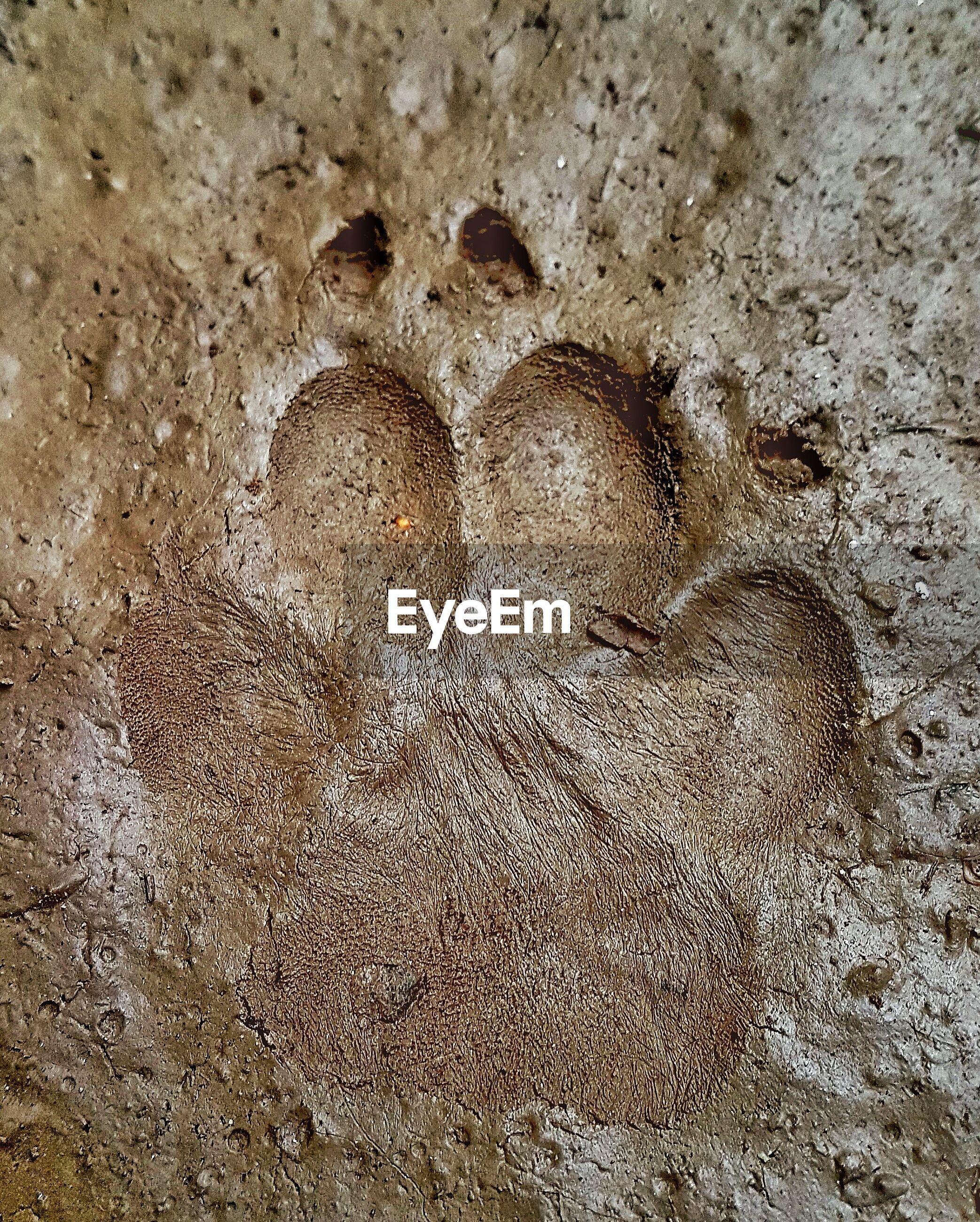 footprint, sand, paw print, no people, day, nature, outdoors, track - imprint, beach, close-up, bird, animal themes